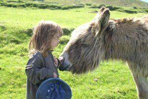 Gioia und Esel