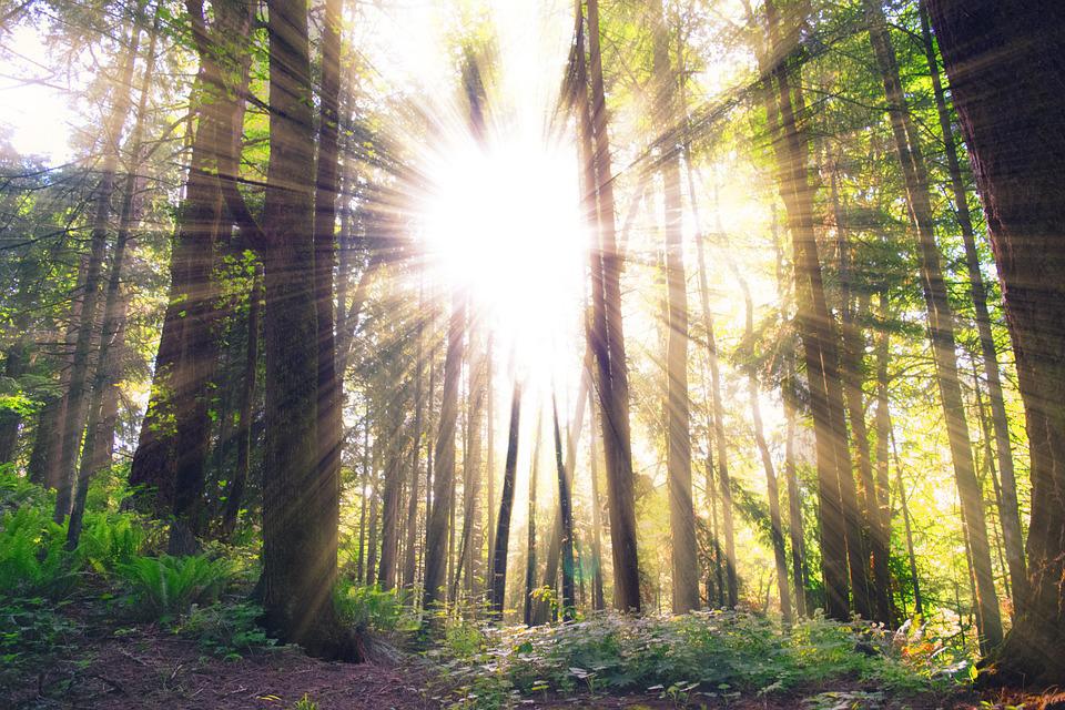 Waldlicht hell